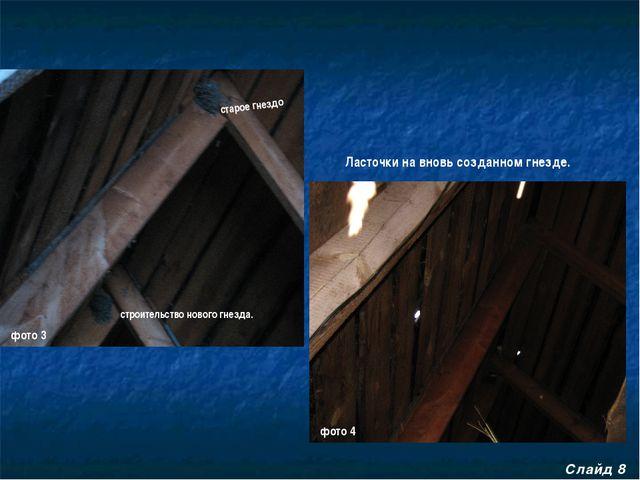 Слайд 8 старое гнездо строительство нового гнезда. Ласточки на вновь созданно...