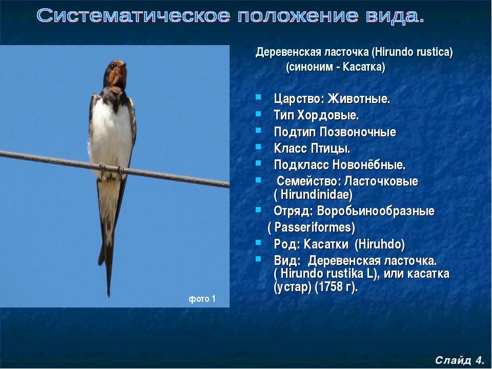 Царство: Животные. Тип Хордовые. Подтип Позвоночные Класс Птицы. Подкласс Но...