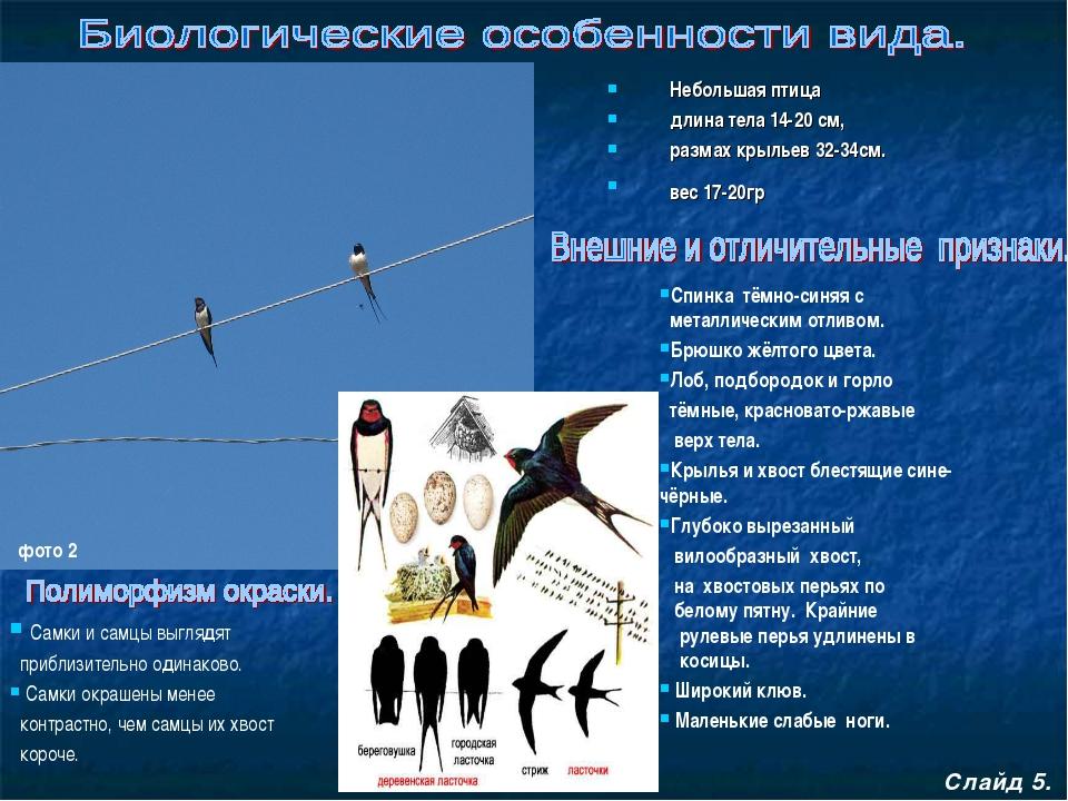 Небольшая птица длина тела 14-20 см, размах крыльев 32-34см. вес 17-20гр Сла...