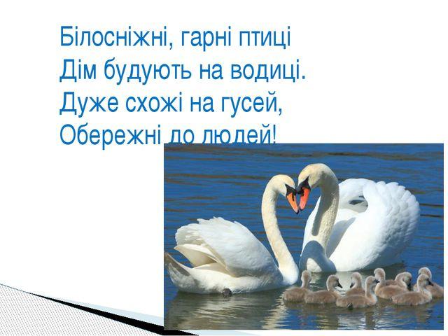 Білосніжні, гарні птиці Дім будують на водиці. Дуже схожі на гусей, Обережні...