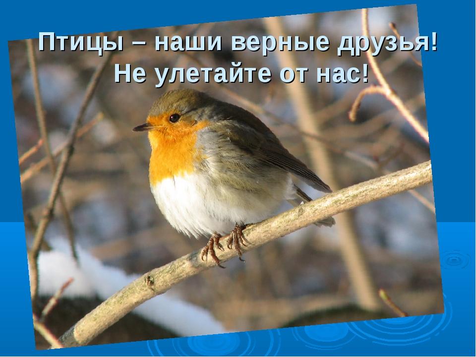 Птицы – наши верные друзья! Не улетайте от нас!