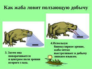 Как жаба ловит ползающую добычу 3. Затем она поворачивается ицентром поля зр