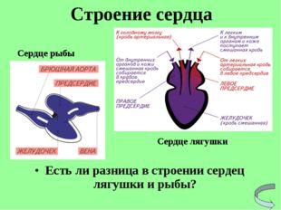 Есть ли разница в строении сердец лягушки и рыбы? Строение сердца Сердце рыбы