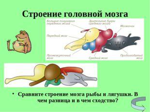 Строение головной мозга Сравните строение мозга рыбы и лягушки. В чем разница