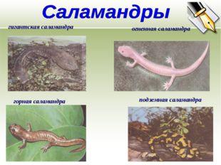 гигантская саламандра горная саламандра подземная саламандра огненная саламан