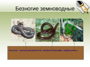 Безногие земноводные Безногие: цейлонский рыбозмей, западный дермофис, тифлон