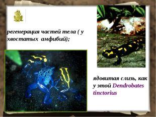 регенерация частей тела ( у хвостатых амфибий); ядовитая слизь, как у этой De