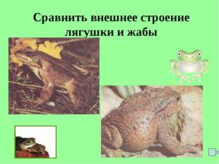Сравнить внешнее строение лягушки и жабы