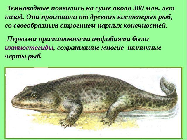 Земноводные появились на суше около 300 млн. лет назад. Они произошли от дре...