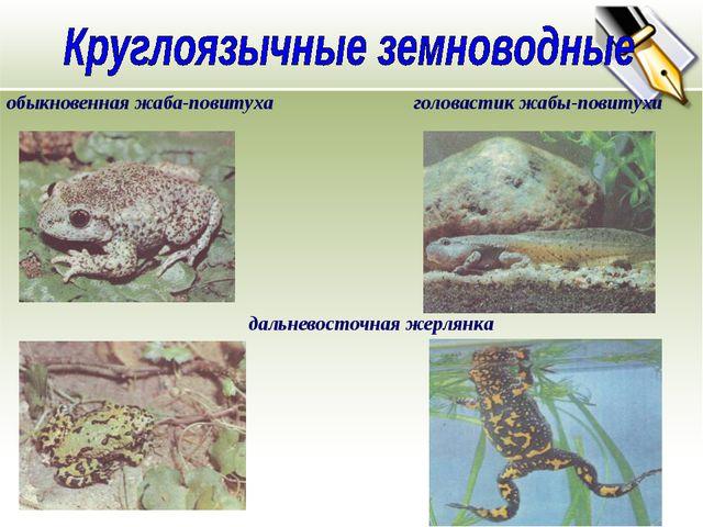 обыкновенная жаба-повитуха головастик жабы-повитухи дальневосточная жерлянка