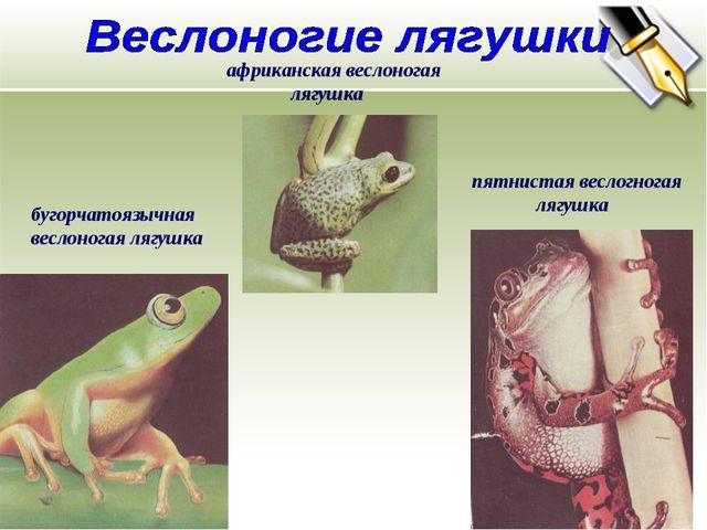 бугорчатоязычная веслоногая лягушка африканская веслоногая лягушка пятнистая...