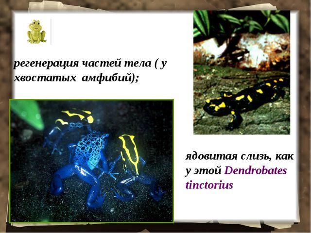 регенерация частей тела ( у хвостатых амфибий); ядовитая слизь, как у этой De...