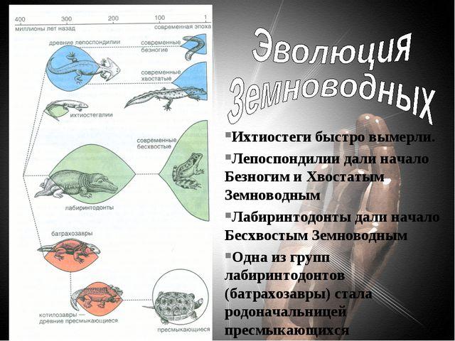 Ихтиостеги быстро вымерли. Лепоспондилии дали начало Безногим и Хвостатым Зем...