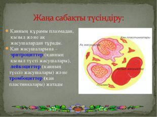 Қанның құрамы плазмадан, қызыл және ақ жасушалардан тұрады. Қан жасушаларына