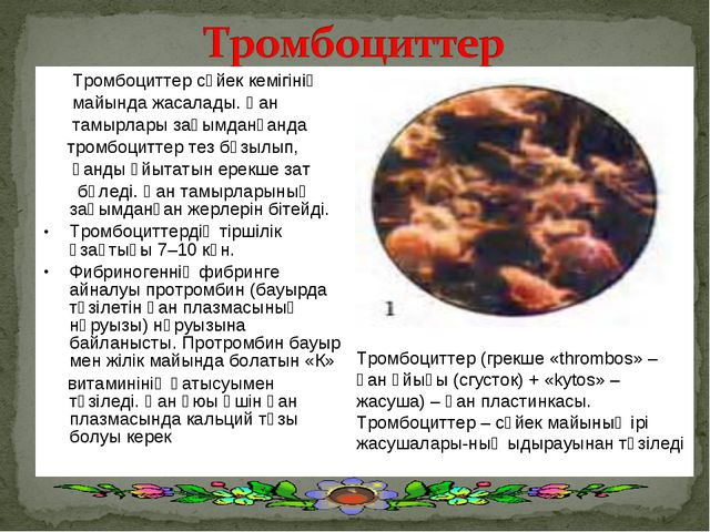 Тромбоциттер сүйек кемігінің майында жасалады. Қан тамырлары зақымданғанда т...