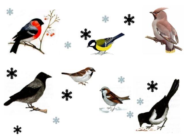 Картинки по запросу зимующие птицы картинки для детей