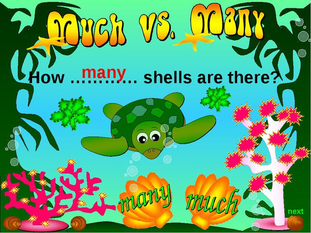 How ………… shells are there? many next