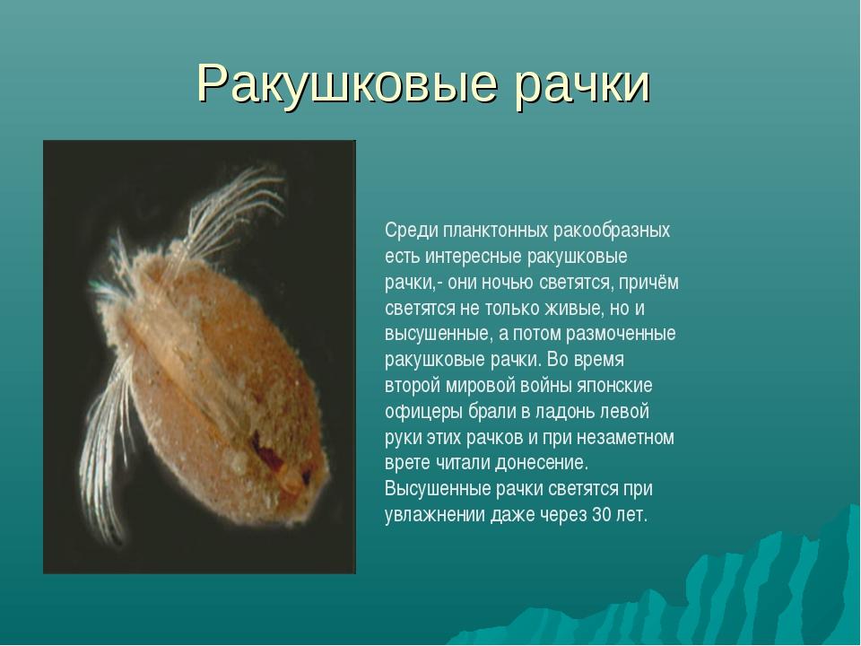 Ракушковые рачки Среди планктонных ракообразных есть интересные ракушковые ра...