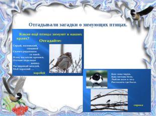 Отгадывали загадки о зимующих птицах.