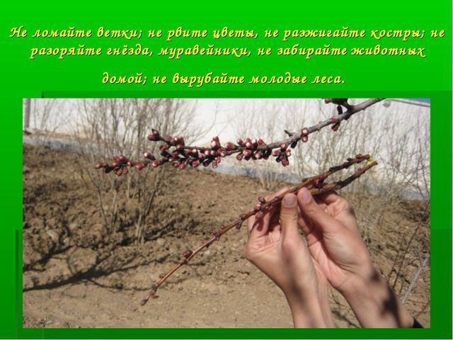 Не ломайте ветки; не рвите цветы, не разжигайте костры; не разоряйте гнёзда,...