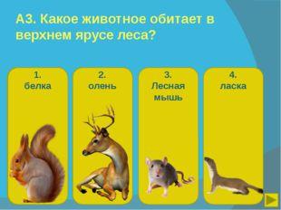 А3. Какое животное обитает в верхнем ярусе леса? 1. белка 2. олень 3. Лесная