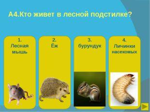 А4.Кто живет в лесной подстилке? 1. Лесная мышь 2. Ёж 3. бурундук 4. Личинки