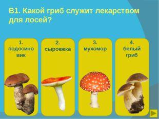 В1. Какой гриб служит лекарством для лосей? 1. подосиновик 2. сыроежка 3. мух