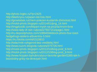 http://photo.bigbo.ru/?p=2425 http://likeforyou.ru/yasen-list-foto.html http