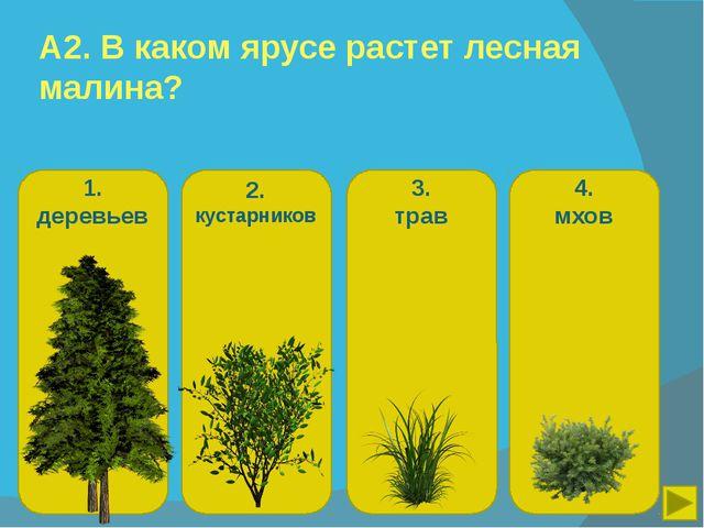 1. деревьев 2. кустарников 3. трав 4. мхов А2. В каком ярусе растет лесная ма...