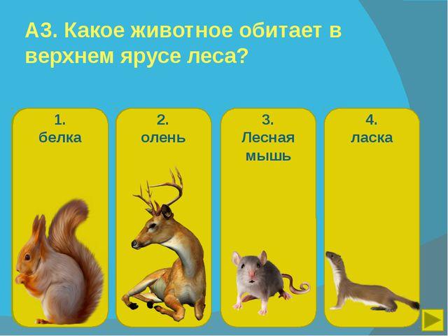 А3. Какое животное обитает в верхнем ярусе леса? 1. белка 2. олень 3. Лесная...