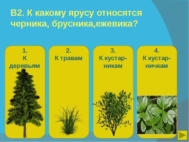 В2. К какому ярусу относятся черника, брусника,ежевика? 1. К деревьям 2. К тр...