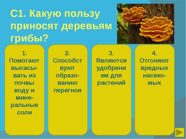 С1. Какую пользу приносят деревьям грибы? 1. Помогают высасы-вать из почвы во...