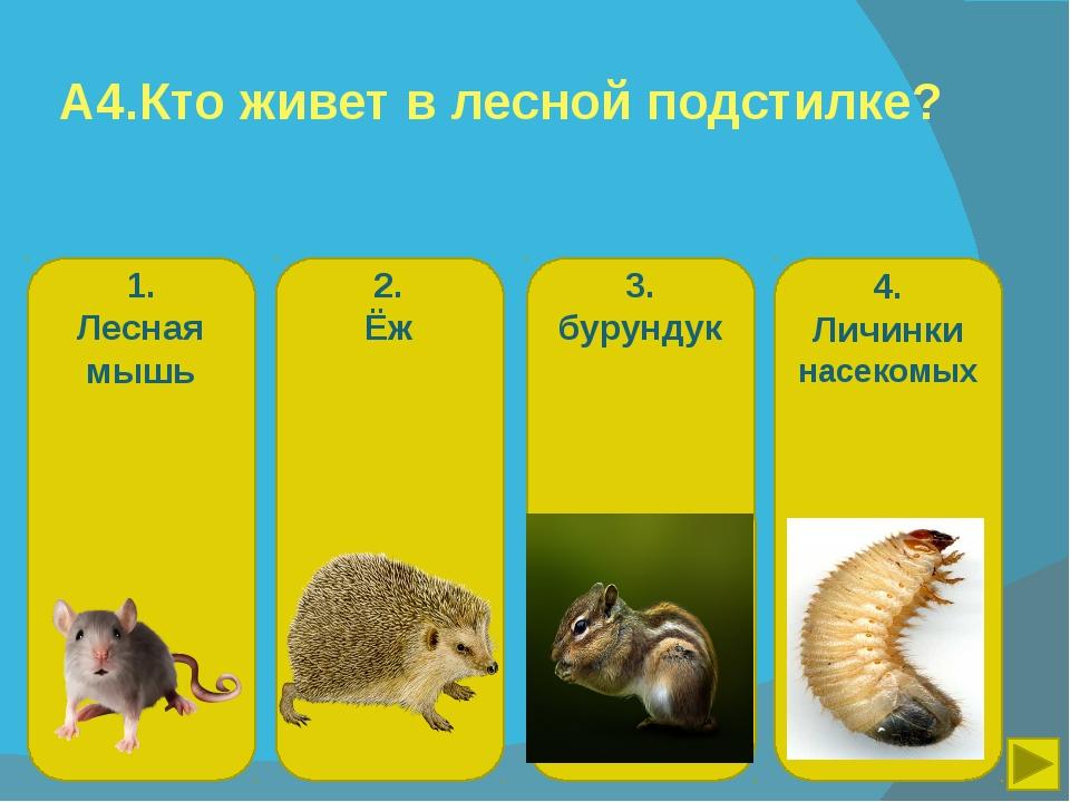 А4.Кто живет в лесной подстилке? 1. Лесная мышь 2. Ёж 3. бурундук 4. Личинки...