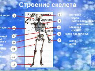 http://skeletos.zharko.ru/main/G121 http://biobib.ru/index.php/anatomiya/ana