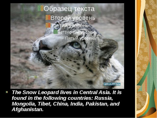 The Snow Leopard lives in Central Asia. It is found in the following countrie...