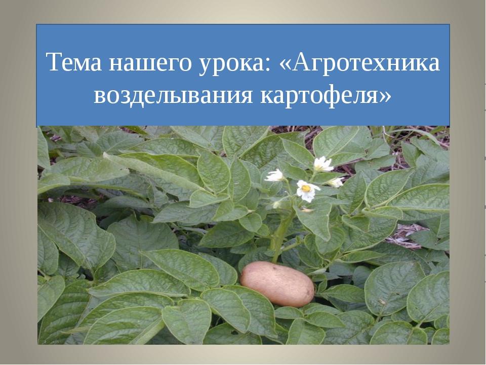 Тема нашего урока: «Агротехника возделывания картофеля»