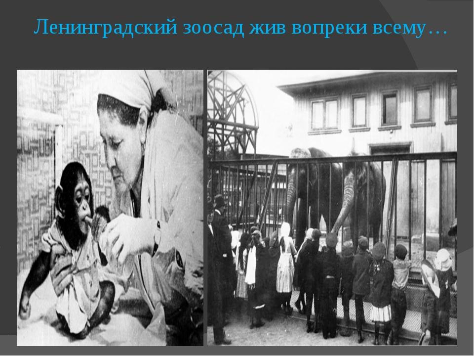Ленинградский зоосад жив вопреки всему…