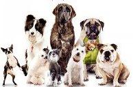 E:\проект про собак\кино.jpg