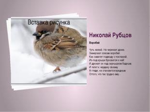 Николай Рубцов Воробей Чуть живой. Не чирикает даже. Замерзает совсем воробей
