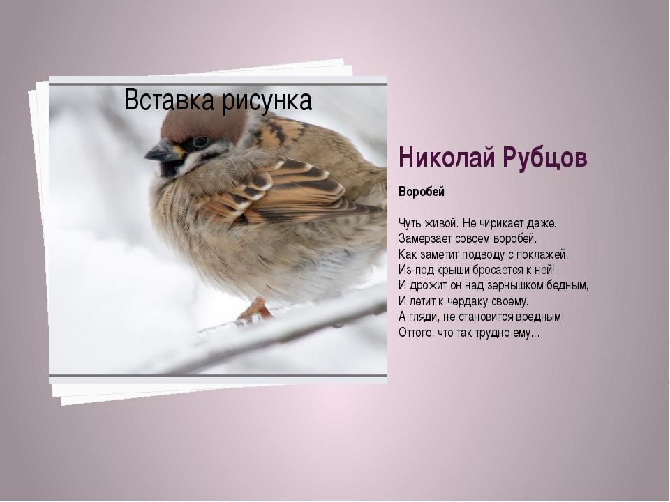 Николай Рубцов Воробей Чуть живой. Не чирикает даже. Замерзает совсем воробей...