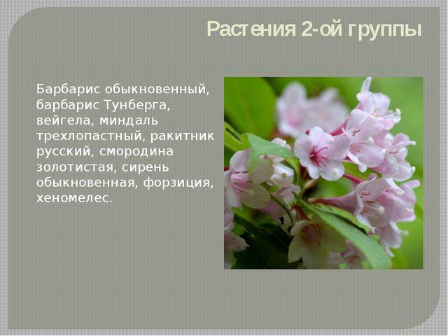 Растения 2-ой группы Барбарис обыкновенный, барбарис Тунберга, вейгела, минда...
