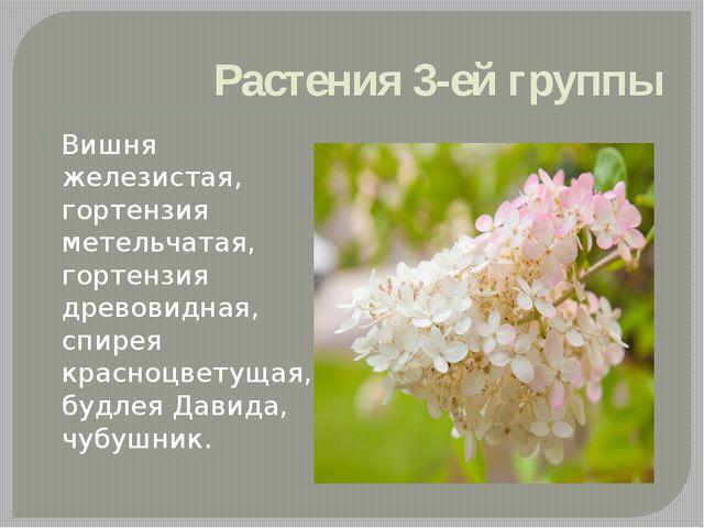 Растения 3-ей группы Вишня железистая, гортензия метельчатая, гортензия древо...