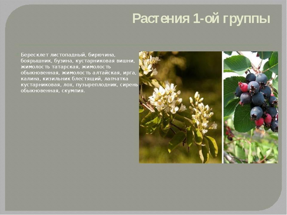 Растения 1-ой группы Бересклет листопадный, бирючина, боярышник, бузина, куст...