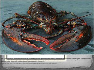 Омар – самый морской рак. Омары обитают на морском дне. Они отличаются мощны