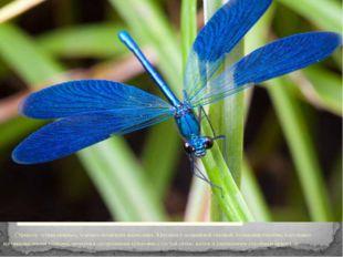 Стрекоза - отряд хищных, хорошо летающих насекомых. Крупные с подвижной голо
