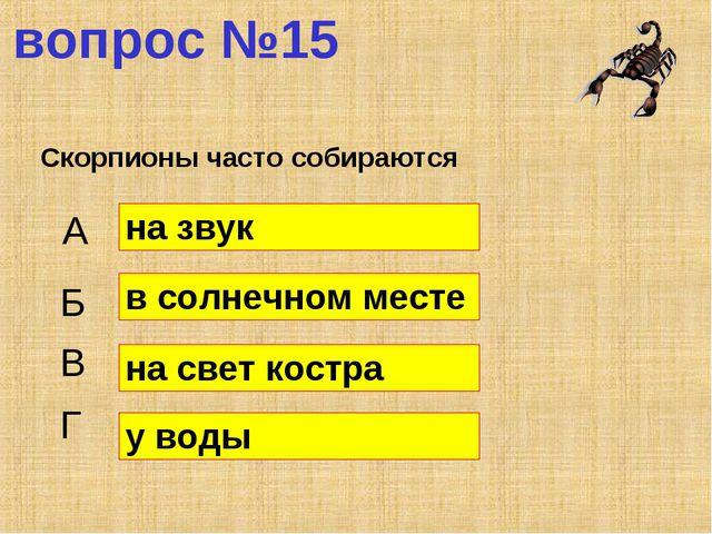 вопрос №15 Скорпионы часто собираются А Б В Г на звук в солнечном месте на св...
