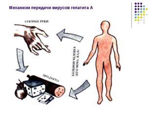 Механизм передачи вирусов гепатита А