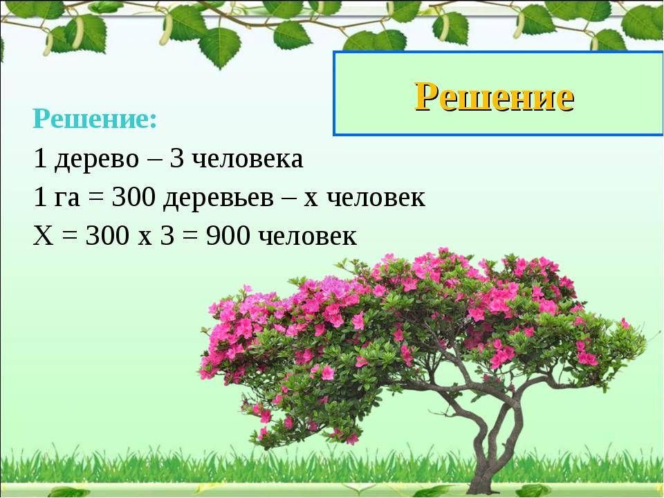 Решение Решение: 1 дерево – 3 человека 1 га = 300 деревьев – х человек Х = 30...