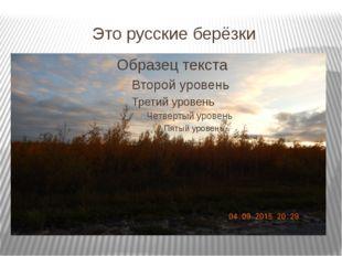 Это русские берёзки