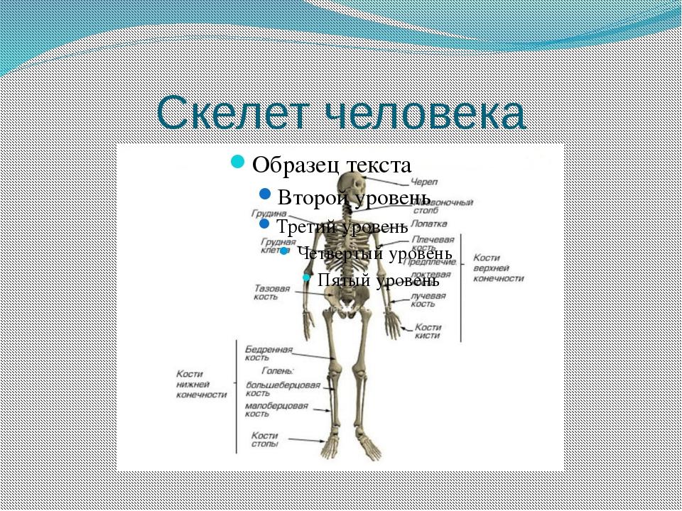 биология скелет картинки призываем вас